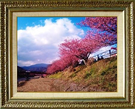 a180 河津桜.jpg
